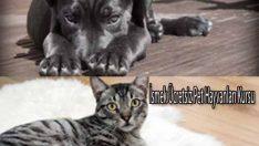 İsmek Ücretsiz Pet Hayvanları Kursu
